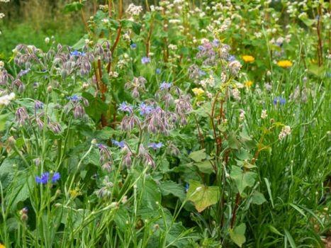 Nützlingsparadies-Blumenmischung